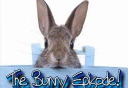 All For Animals #27 – Bunnies 101: Basic Rabbit Care