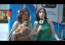 All For Animals #29 – Meet Matilda III, The New Algonquin Cat!