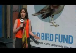 All For Animals #33: Wild Bird Fund