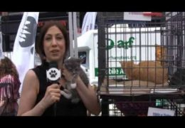 All For Animals #36: Maddie's Pet Adoption Days