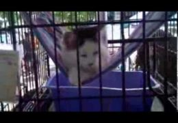 All For Animals Extra: Adoptapalooza, September 8, 2013