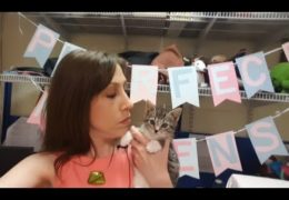 All For Animals #45: Kitten Season At Animal Care Centers of NYC