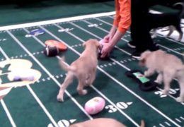 Animal Planet Puppy Bowl Experience – Times Square 2014