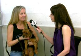 All For Animals #46: Animal Haven 50th Anniversary & New Shelter!