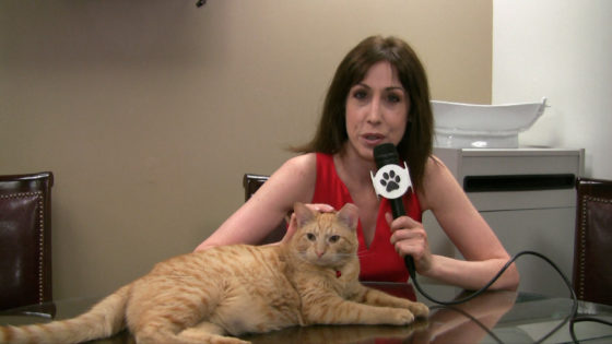 All For Animals #47: Hamlet, The New Algonquin Cat