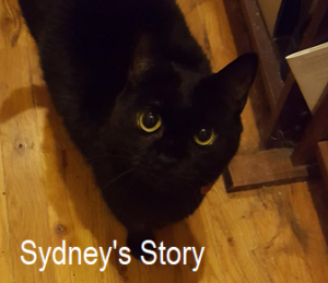 A Cat With Cancer: Sydney's Story