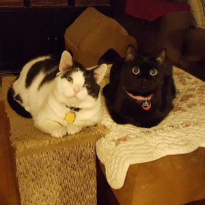 Two Cats With Cancer: Meet Sydney & Cheeks