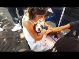 All For Animals TV #53 – Adoptapalooza 2018 in Union Square