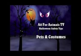 AFA Quick Tips: Halloween Pet Safety