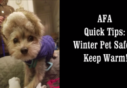AFA Quick Tips: Winter Pet Safety with the ASPCA