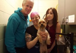 All For Animals TV #59: Dog Guy Foundation