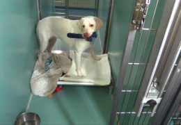 All For Animals TV #58 – Rational Animal Mother's Comfort Project