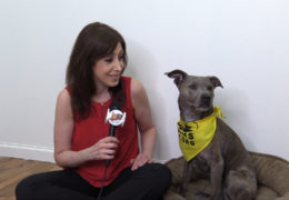 All For Animals TV #60: PAWS NY