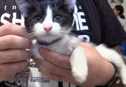 All For Animals TV #62 – TNR In NYC: Meet Flatbush Cats & TNR Utopia