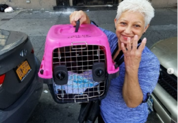 AFA Extra: Meet NYC Cat Rescuer Iris Lugo