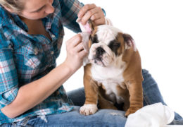 AFA Quick Tips! Summer Pet Safety: Wear Sunscreen