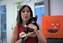 All For Animals TV #64 – Best Friends Animal Society New York City