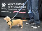 Mayor's Alliance for NYC's Animals refines role, transitions key programs to other non-profits