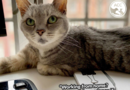 Working from home? Animal Care Centers of NYC sees reduced staff/volunteers: Needs fosters ASAP!!