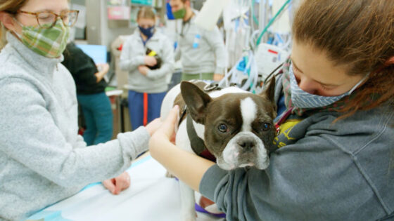 Pot may be legal, but it can kill your pet. Here's what you need to know.