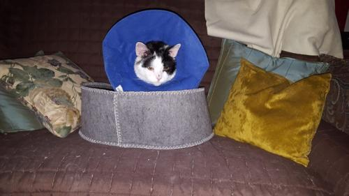 April 2018: In the cone collar after surgery for skin cancer.