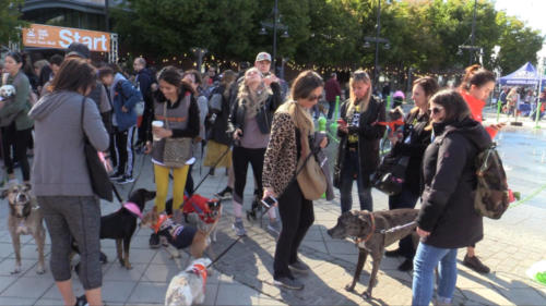 Strutt Your Mutt NYC 2019