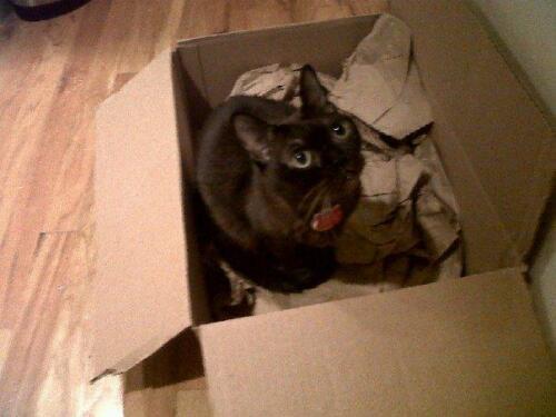 titus-box